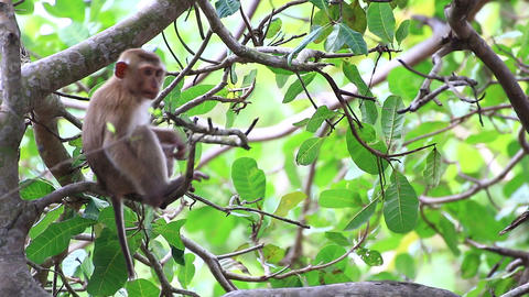 Young monkey sitting on the tree Live Action