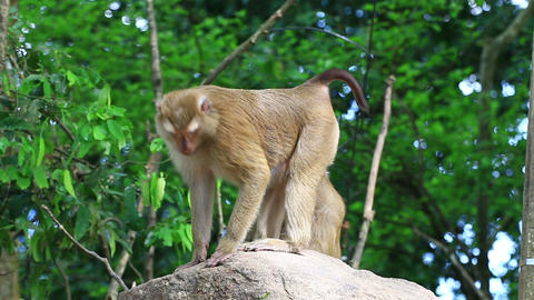 Monkey standing on the rock Live Action