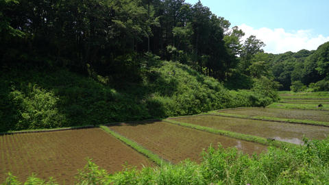 Japanese summer rural view Footage