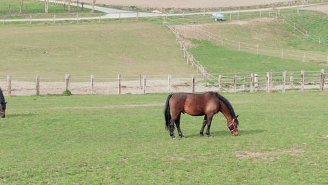 Brown grazing horse on horse farm at spring day near fence Footage