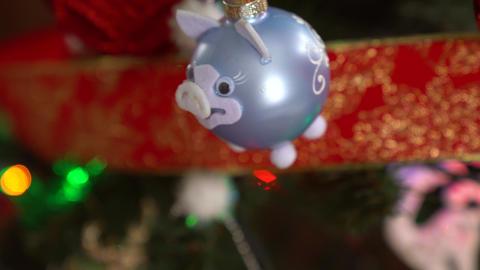 Christmas decoration on tree with Christmas lights. Pig ball 2019 Live Action