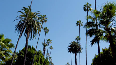 Palm Tree Alley - typical for Beverly Hills - travel photography Footage