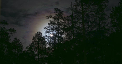 Night mysterious panoramic landscape in cold tones - silhouettes of the spruce GIF