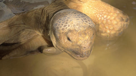 A closeup of a big turtles head Live Action