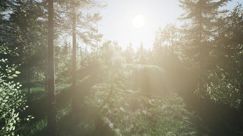 Healthy Green Trees in a Forest Footage