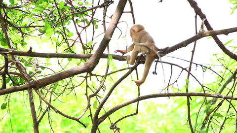 Young monkey jumping on the tree Live Action