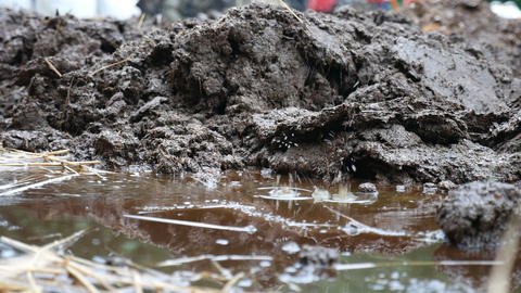 raining cowpat, cow dung Footage