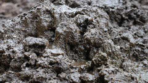 raining cowpat, cow dung Stock Video Footage