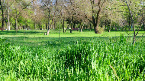 fresh green grass with long leaves in the park in the afternoon Archivo