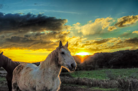 Horses in a farm at sunset Photo