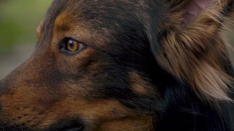Portrait of a cute mongrel dog outdoors Archivo