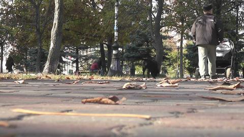 autumn park 01 Stock Video Footage