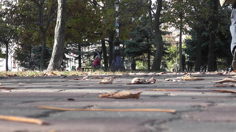 autumn park 07 Stock Video Footage