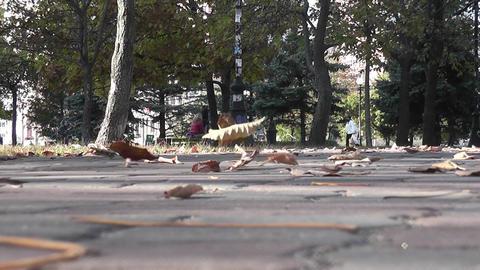 autumn park 09 Footage