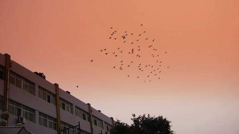 Flock of birds flying above the building Stock Video Footage