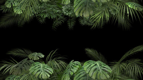 Tropical plant on an alpha channel Videos animados