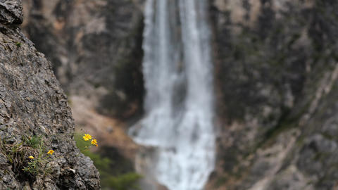 Timelapse - Flowers moving in a breeze with blurred waterfall in the background Live Action