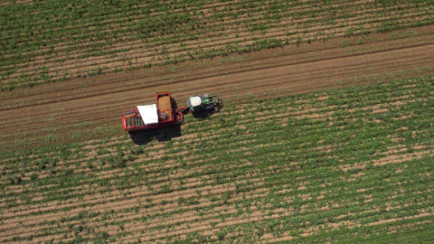 Aerial - Tractor collecting potatoes with modern potato-digger trailer Footage