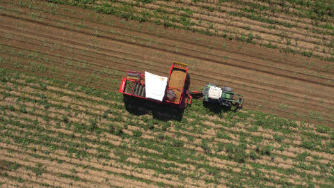 Aerial - Production of potatoes in the field Footage