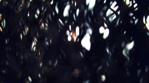 Soft sun beams shine through pine tree needles air macro close up slow motion Footage