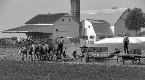 Amish Farmers Harvesting the Fields Photo