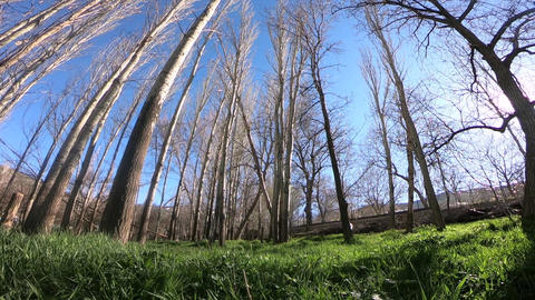 Forest view in the spring Footage