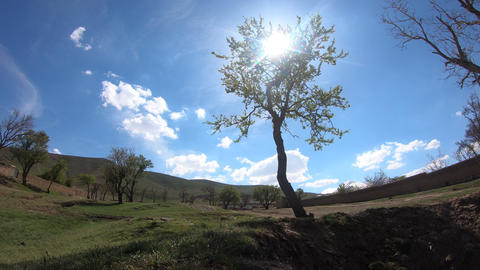 Time Lapse Tree view in the spring Footage