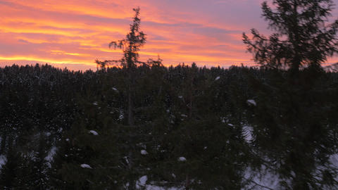 Aerial, raw footage - Winter sunset over the snowy forest. No color correction Footage