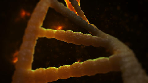 DNA structure Animation