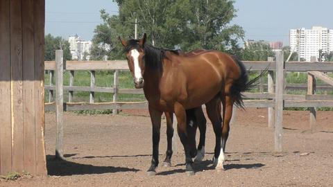 Horse on the farm Footage