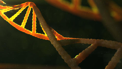 Macro shot of 3d DNA structure Animation