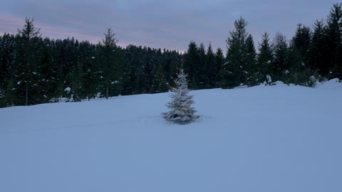 Aerial - Christmas tree placed on a snowy field in forest Footage