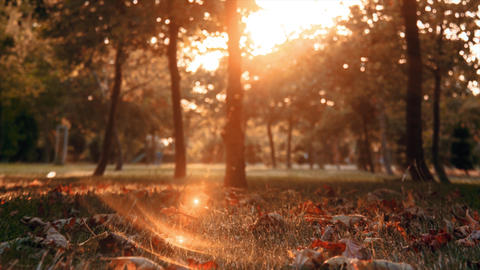 Autumn, spring theme. Sunlight and leaf, plant on bright day. Floral, foliage, fall in garden Footage