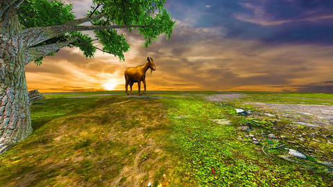 11 landscape with goat grazing in meadow of grass on hill top Animation