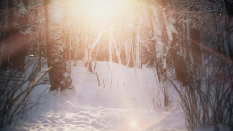 4K Snow and sun together in forest. Snowfall in winter time with beautiful, shiny sun and glow on Live Action