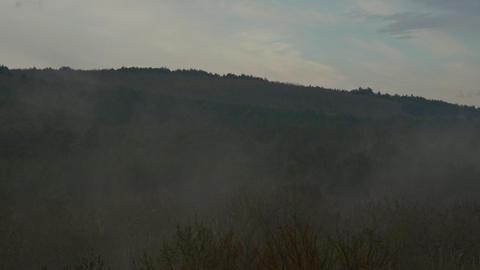 Beautiful Foggy Mist Forest At Sunrise Footage