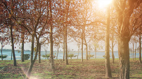 4K Beautiful theme video of autumn. Sea, forest and sunshine with leaves. Sunshine and panaroma of Live Action