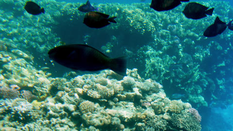 4k video of beautiful seascape of coral reef in REd sea. Ocean underwater life Live Action