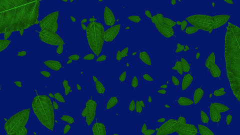 Isolated falling green leafs in blue background. Concept of autumn, leaves, nature and fall Animation
