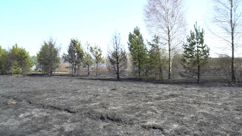 Burned forest and field after wildfire, black ground, ashes, smoke, dangerous Footage