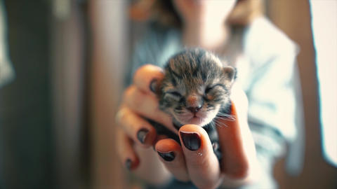 Kitten on palm, smallest, unopened cat in woman's hand. Little newborn beautiful pet, mammal and Footage