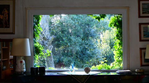 Time lapse of big window with ivy leaves on the edges in a vintage living room Footage