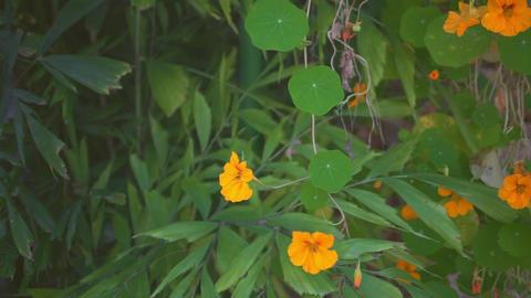 U Flowers01 Footage