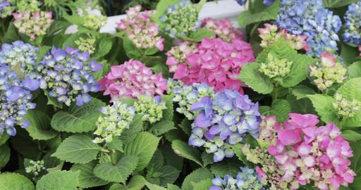 Flowerbed of flowers Footage