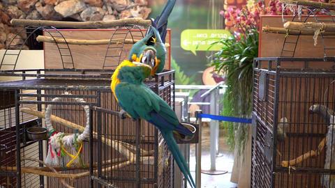 Large Parrots Live Action