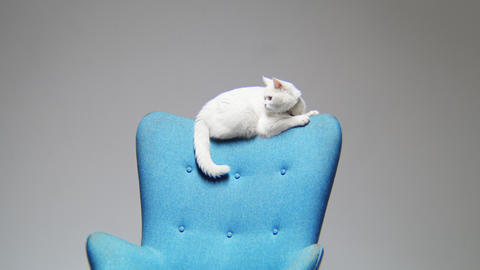 motion to cute cat lying on chair backrest in light room Archivo