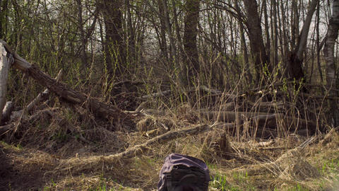 Woman sitting on a big fallen tree and writing in a diary Footage