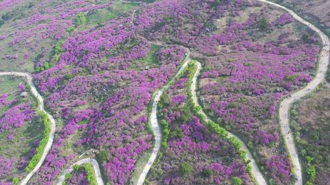 Aerial Drone shot Hwangmaesan mountain and beautiful... Stock Video Footage