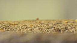 Macro shot of grain dropping onto millstone Footage
