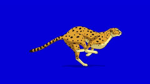 Running Cheetah. Classic Disney Style Animation on Chroma Key Blue Screen Footage